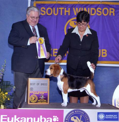 South Windsor Kennel Club - 11/22/20