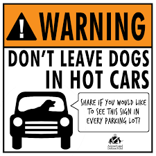 In the face of heat...protect your pets!