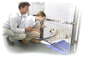 Cirurgia Cardíaca em Cães e Gatos em BH