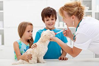 Vacinação e Vermifugação