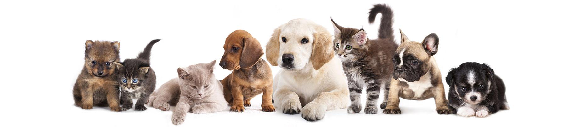 Cachorro de gatos