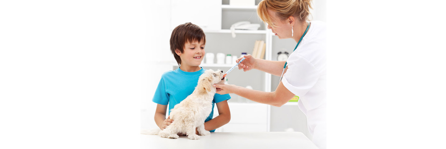 Atendimento veterinário Sao Geraldo