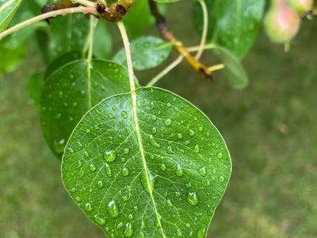Raindrops Tell Stories
