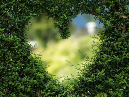 Ouvrir son cœur grâce au Fragonia