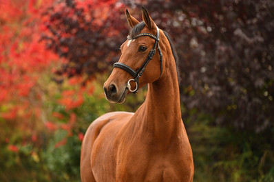 Kommerzielle Pferdefotografie