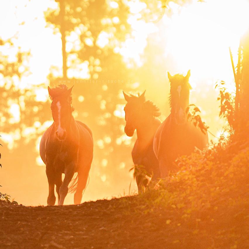 Pferdefotografie - Hof Liebenwalde