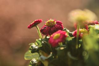 Balkon Blumen & ein Video