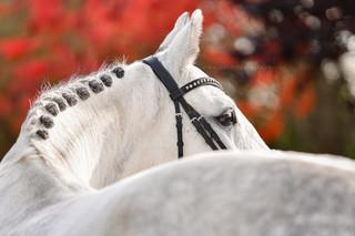 Pferde aus Ladeburg
