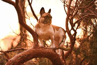 Herzenshund Roxy