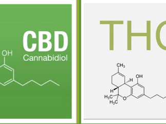 Can CBD reduce the adverse effects of THC?