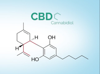 How does CBD work with the endocannabinoid system?