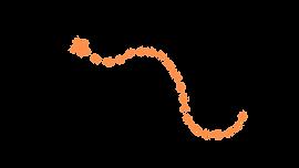 orange dotted line.png