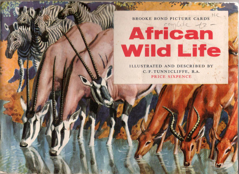 African Wild Life - picture card book