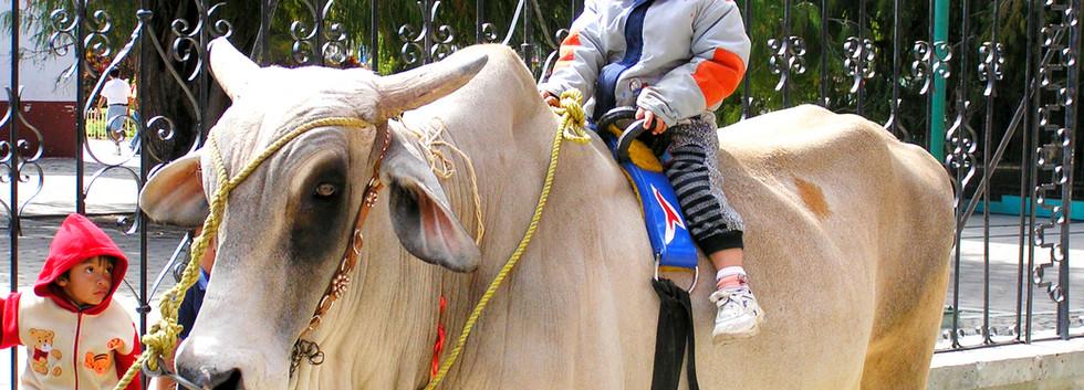 Bull Ride in Tule_edited.jpg