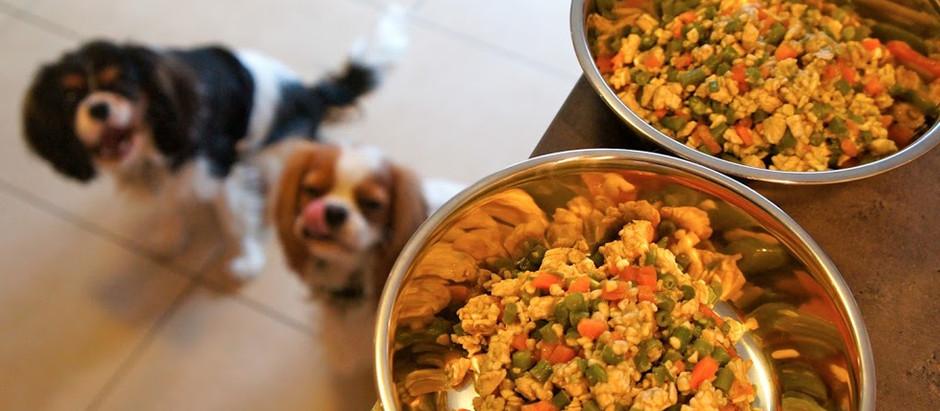 Gagnez une recette individualisée pour votre chien ou chat !