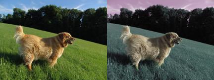 Dog vision. Vision du chien. Couleur chien
