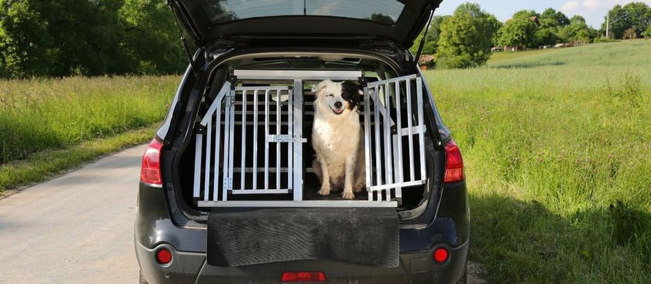 Transportez en sécurité vos animaux de compagnie