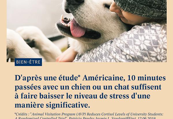 Nos animaux, de véritables antistress !