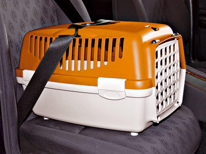 Installation correcte d'une caisse à chat à l'aide de la ceinture de sécurité