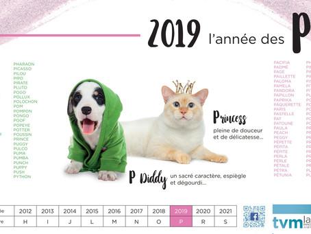 """2019, l'année des """"P"""" !"""
