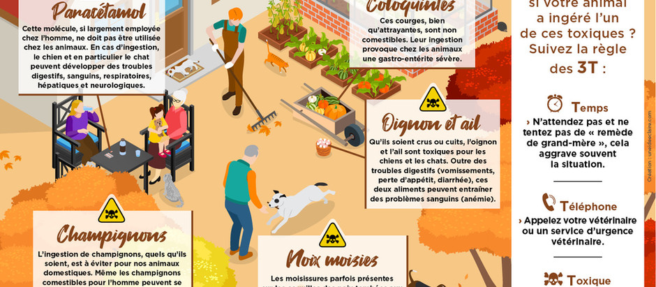 L'automne est là, les risques d'intoxication associés aussi