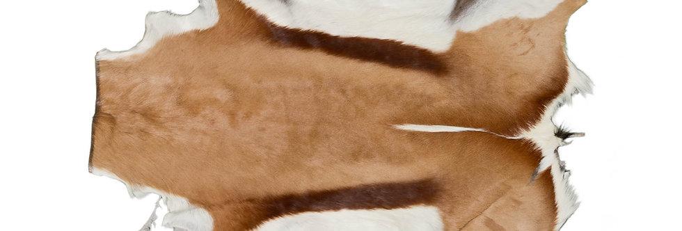 Springbok - Natural