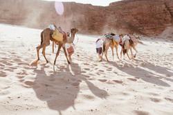 Wüstenreise-November2019-103