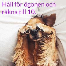 count-to-ten-dog.jpg