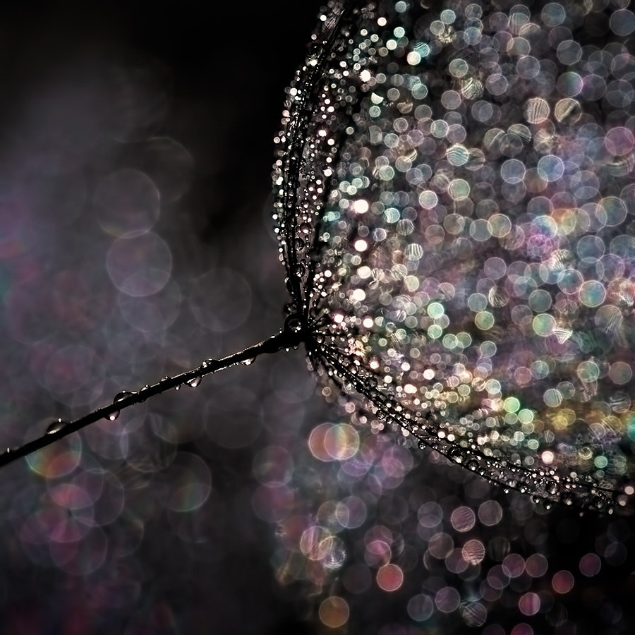 Seedling by Ursula Abresch on 500px.com