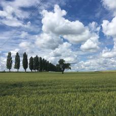 Champs de blés Riespach ... un air de Toscane