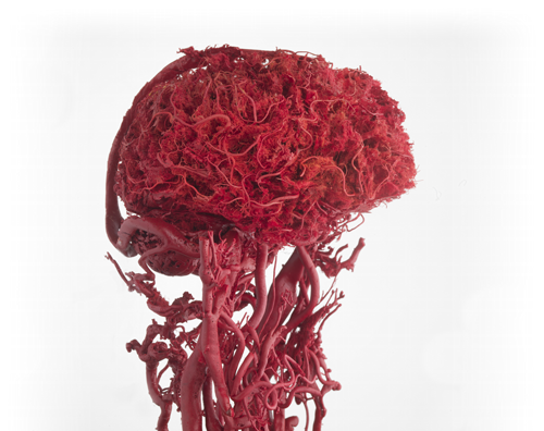 You can see just how much blood flow occupies your mind!