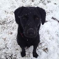 Barnabas Snow.jpg