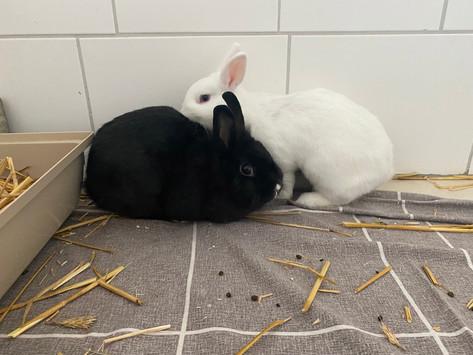 Zahlreiche Kaninchen  – suchen ein neues Zuhause