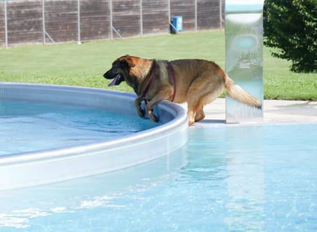 Hundebadetag in der Therme Bad Aibling - ein voller Erfolg