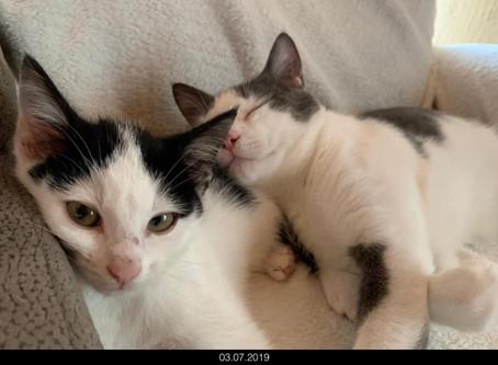 Kitten und kein Ende - und wieder fehlt Kitten-Naßfutter und Welpenaufzuchtmilch