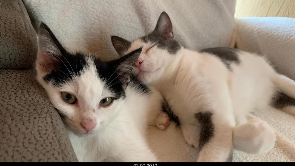 Kitten und kein Ende - und wieder fehlt Kitten-Naßfutter