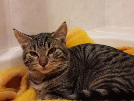 Lilly und Lucky - wollen Bad gegen eine neue Heimat und die Freiheit tauschen