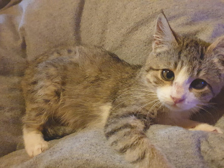 Judy und Clarissa - zwei besondere Katzen suchen besondere Menschen mit einem besonderen Zuhause