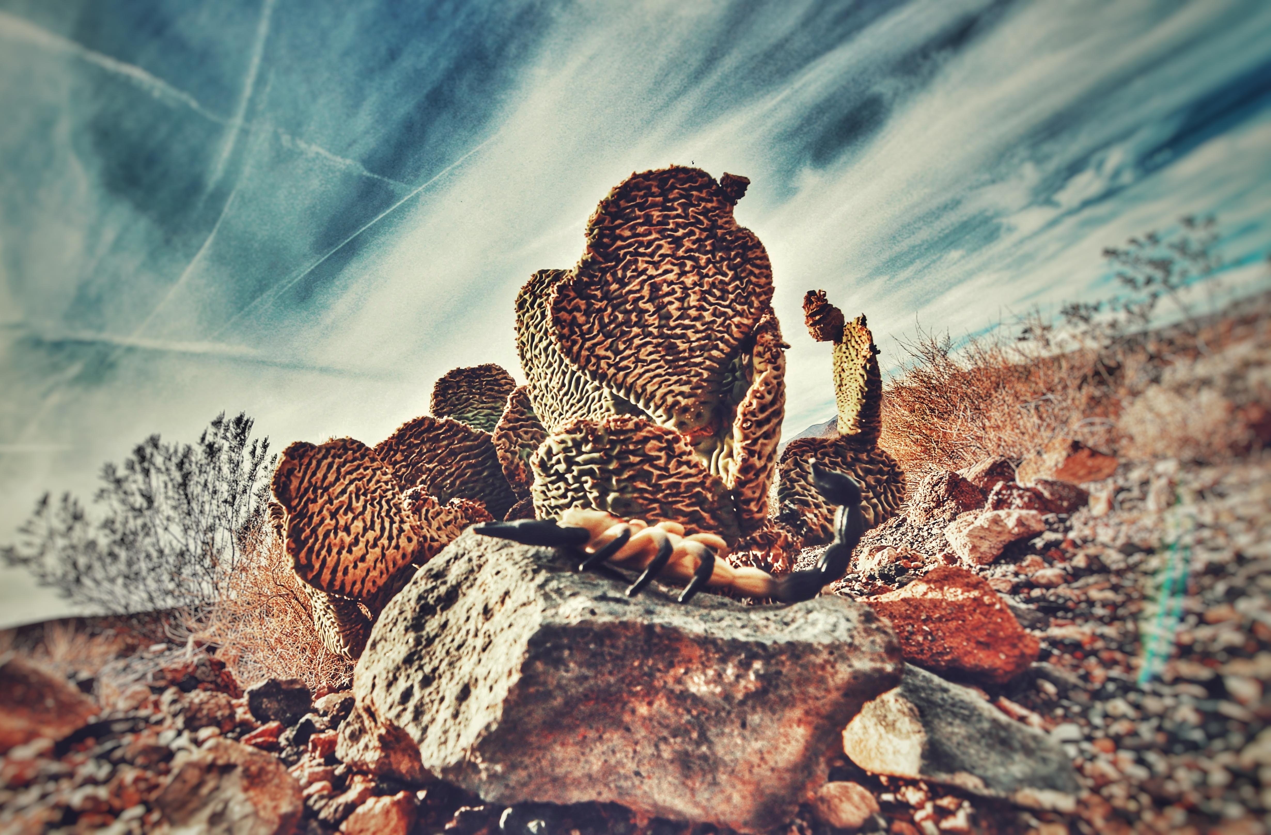 Arizona Scorpio