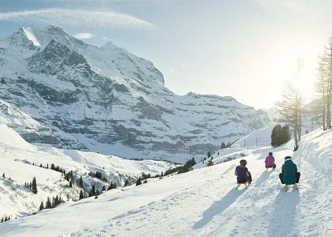 Schlitteln-Fox-Run-Jungfrau-Wengen.jpg