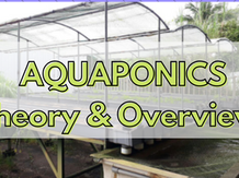 AQUAPONIC THEORY AND OVERVIEW