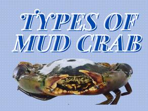 The 4 Mangrove crabs species for Aquaculture | Aquaculture Technology