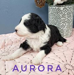 Aurora (3).jpeg