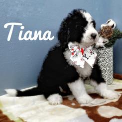 Tiana (10).jpeg