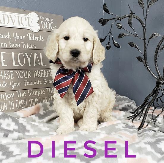 Diesel (6).jpeg