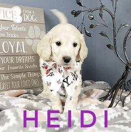 Heidi (4).jpeg