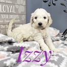 Izzy (7).jpeg