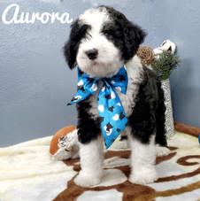 Aurora (14).jpeg