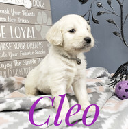 Cleo (10).jpeg