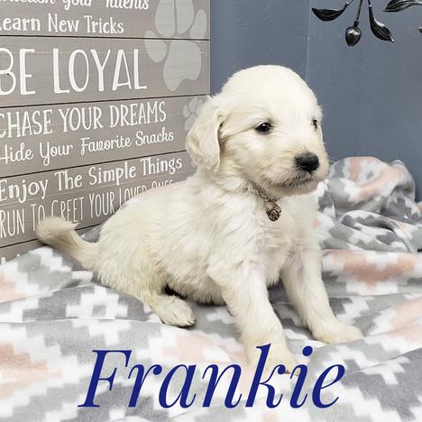Frankie (5).jpeg